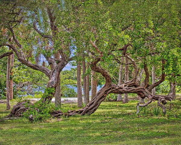 The Tree Photography Art   It's Your World - Enjoy!