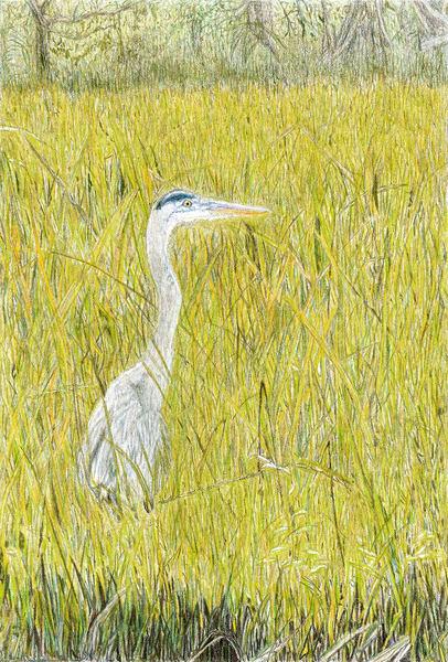 Grey Heron On Edisto Art | Digital Arts Studio / Fine Art Marketplace