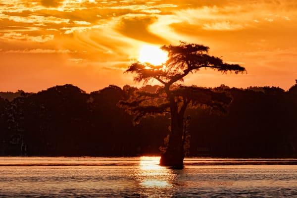 Cypress Sunrise Reelfoot Lake 7041f Photography Art | Koral Martin Fine Art Photography