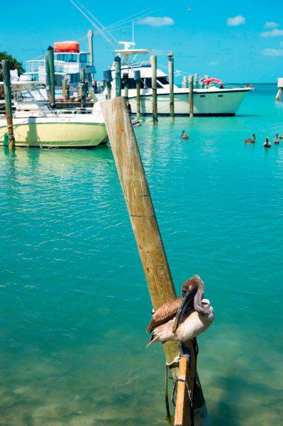 Pro Photo Va Fiesta Key Pelican 3 Photography Art   Professional Photography of VA LLC