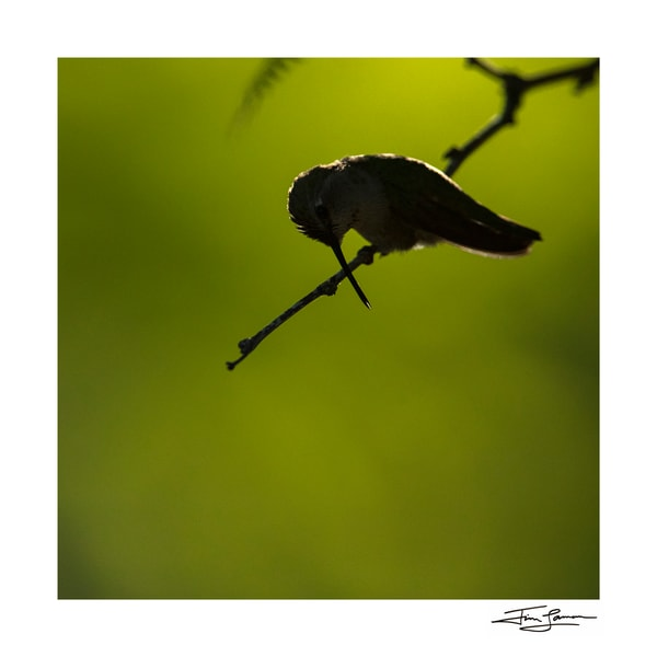 Photographic art of a hummingbird in silhouette.
