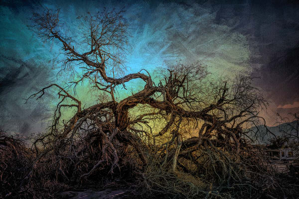 Dancing Tree Of Death Valley   California Photography Art | Kendall Photography & Fine Art