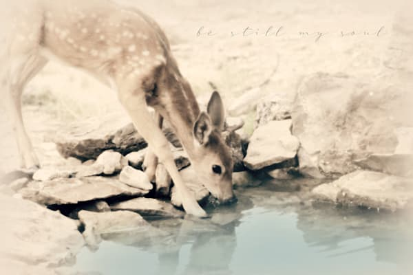 Sparkly Fawn Art be still
