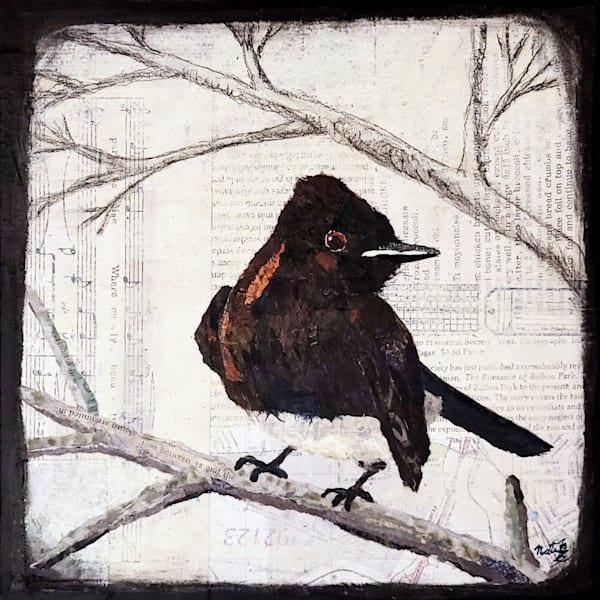 Backyard Birds: Black Phoebe Art | Poppyfish Studio