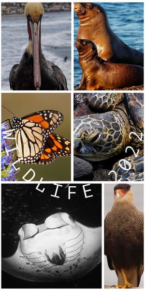Wildlife Calendar Art | Bjorn Kleemann Photography