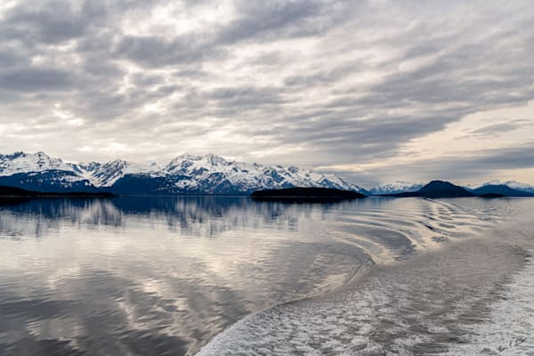 Cruising South At Sunset Art   Alaska Wild Bear Photography