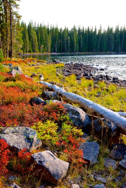Waldo Lake In Fall Art   Shaun McGrath Photography