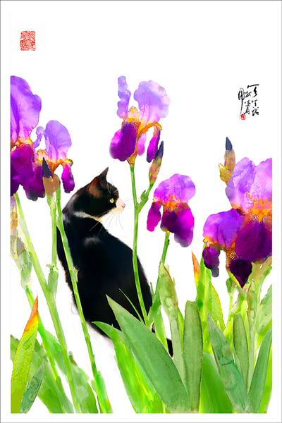 Cat And Iris Photography Art | Cheng Yan Studio