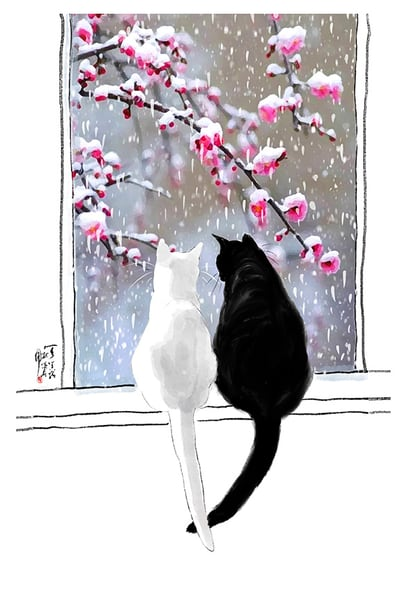 Cats And Snow Blossom Photography Art | Cheng Yan Studio