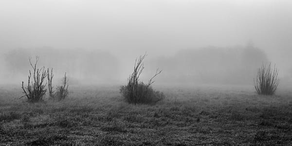 Desolate Pasture