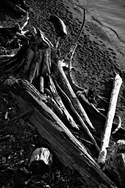 Driftwood #1
