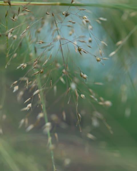 Summer Breeze Photography Art | Tamea Travels