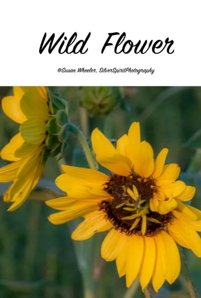 Wildflower Merch Photography Art   Silver Spirit Photography