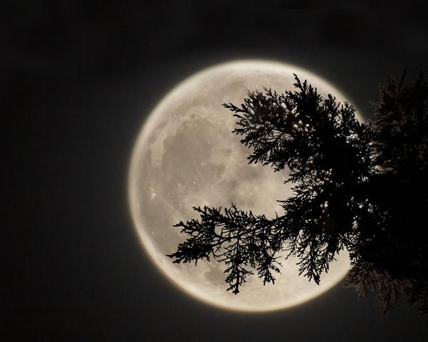 Harvest Moon Of '21 Art   Jim Livingston Art
