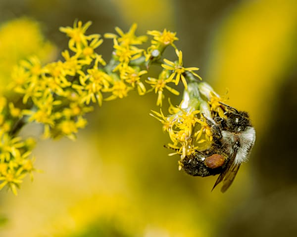 Busy Little Bee Photography Art | Tamea Travels