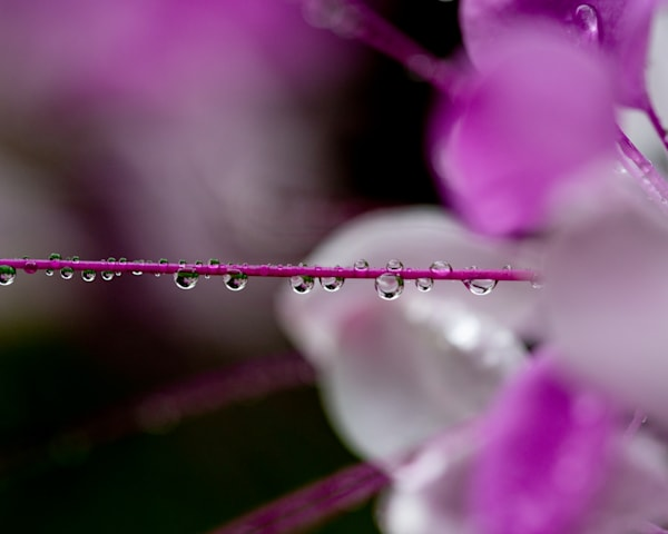 All Of The Miniature Worlds   Pink Photography Art | Tamea Travels