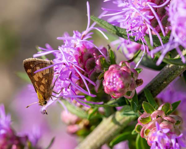 Purple Macros Photography Art | Tamea Travels