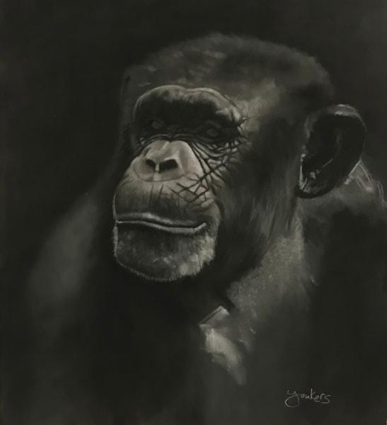 Chimpy Art   Dane Youkers Fine Art
