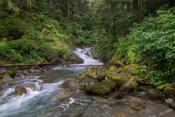 Stream In The Mystic Forest Art   Alaska Wild Bear Photography