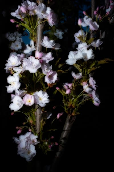 The Lights Of Spring Art   Martin Geddes Photography