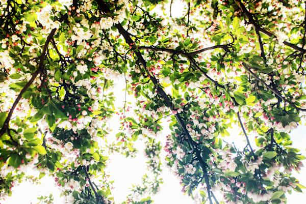 Spring Trees Art   Martin Geddes Photography