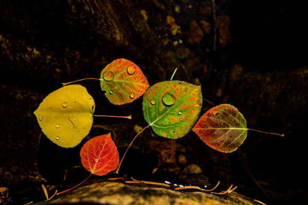 Colors Fall  Photography Art | Colorado Born Images