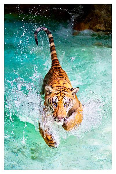 Water Tiger Photography Art | Cheng Yan Studio