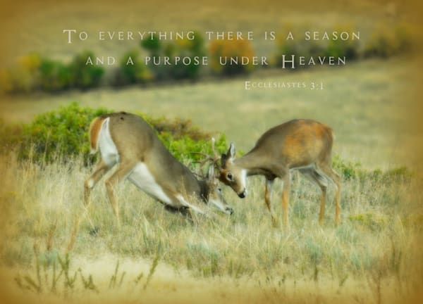 Bucks Sparkly Art