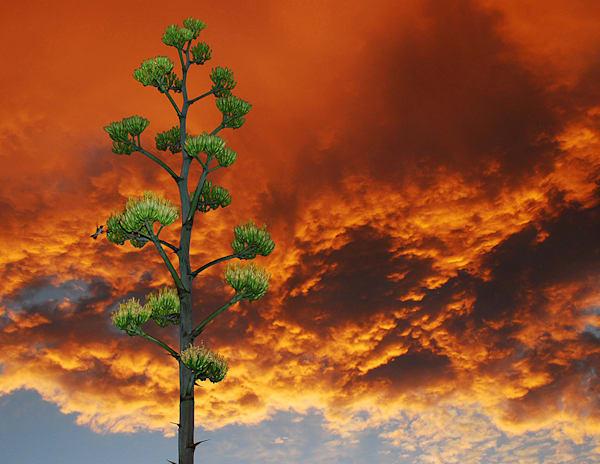 Sunset of the Century in Sedona Arizona