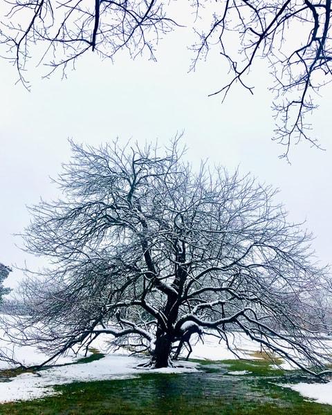 bendable, tree, winter, loosepark, loose, snow