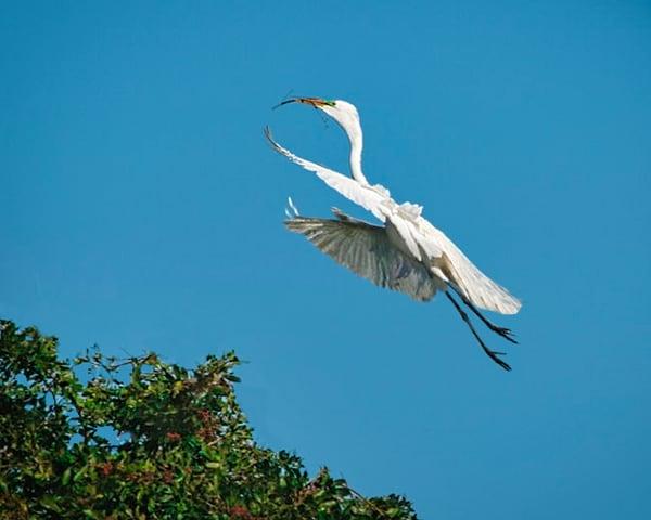 Crane Nesting Photography Art | It's Your World - Enjoy!