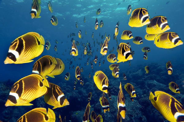 Amazing shot of a school of fish in Hawaii.