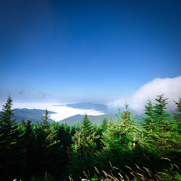 Wannabe Naturalist Clingmans Dome   Eugene L Brill