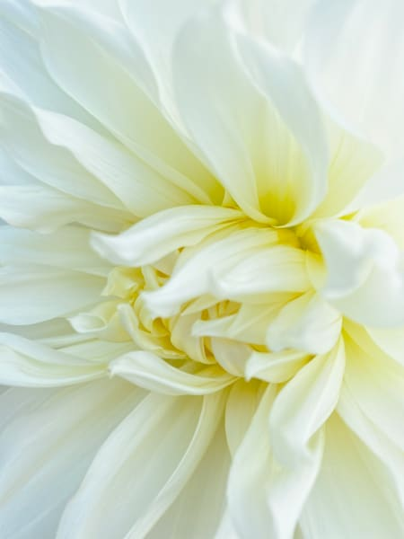 Pure White Flowers are Gorgeous as Wall Art