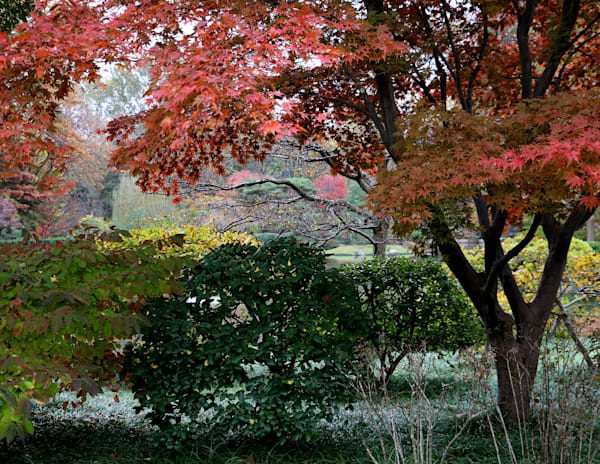 Tea House Island at the Japanese Garden at the Missouri Botanical Garden