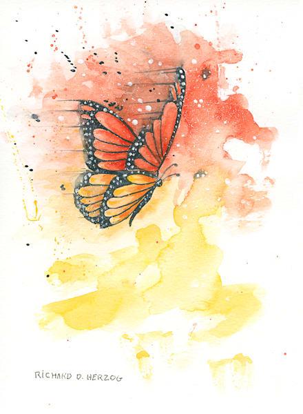 Butterfly 10 Art   Cincy Artwork