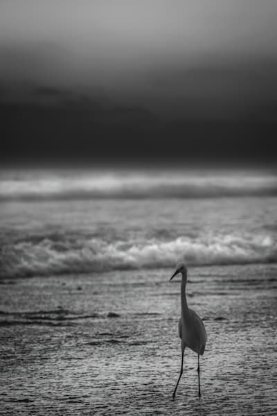 'almost' Alone At The Beach Photography Art | Rinenbach Photography