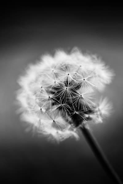 Bw Dandie Photography Art | Rinenbach Photography