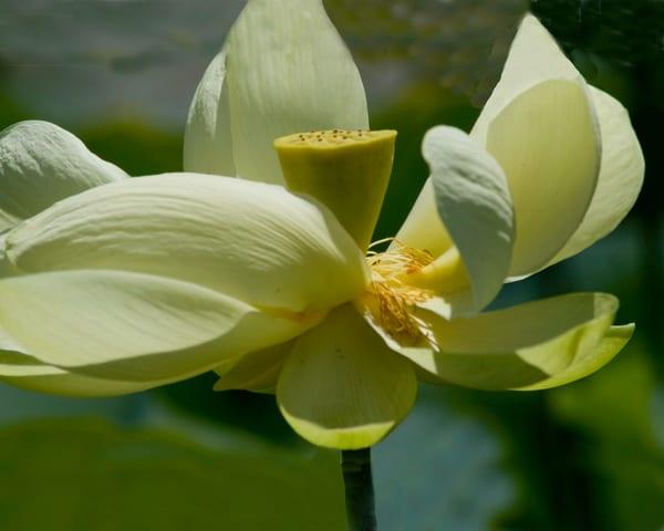 Lotus Dance Photography Art   It's Your World - Enjoy!