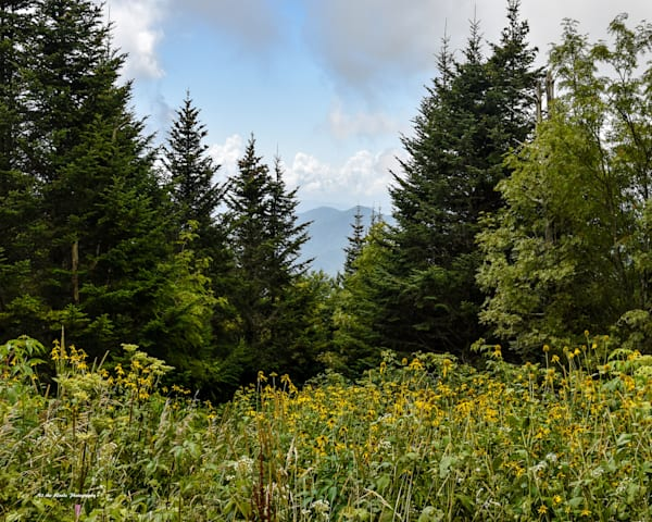 Clingmans Dome Photography Art | N2 the Woods Photography - Nature and Wildlife Artwork