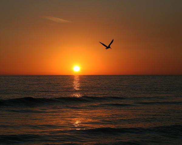 Pelican Sunset Photography Art | It's Your World - Enjoy!