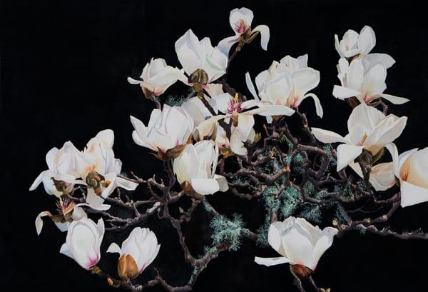 White Magnolia  Art | victoriabishop.art