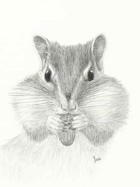 'chubby Cheeks' Chipmunk Photography Art | Nature's Art Productions