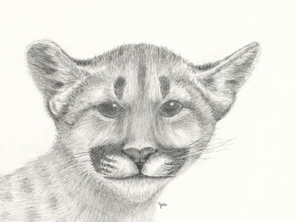 'one In Six' Mountain Lion Cub Photography Art | Nature's Art Productions