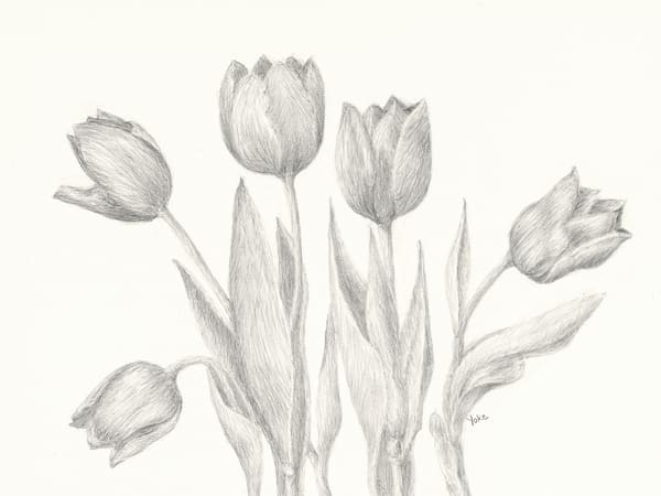 Tulips From A Dutch Girl Photography Art | Nature's Art Productions