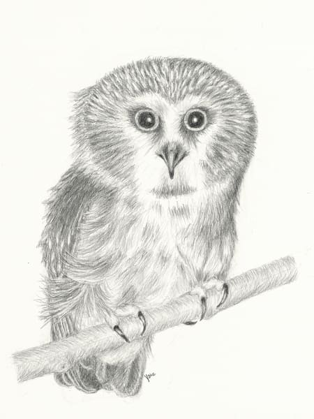 'windy Migration' Saw Whet Owl Photography Art | Nature's Art Productions