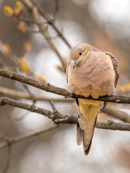 Dove - I see you seeing me - shop fine art prints   Closer Views
