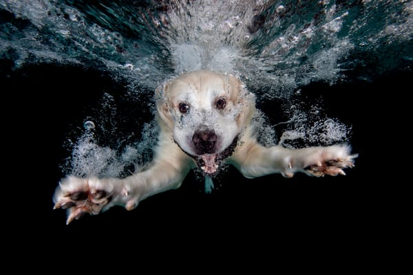 Axl Swimming Underwater 83 A0573 Dover Fl Usa Photography Art   Clemens Vanderwerf Photography