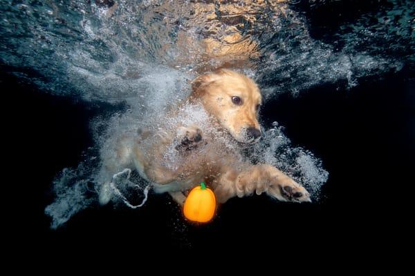 Journey Looking Underwater Eyes Open 83 A9837 Dover Fl Usa Photography Art   Clemens Vanderwerf Photography