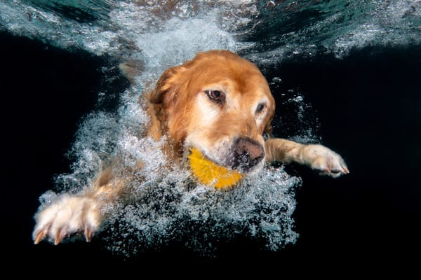 Ozzy Swimming Underwater With Ball 83 A7762 Dover Fl Usa Photography Art   Clemens Vanderwerf Photography